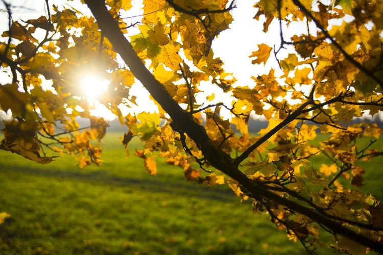 Autumn Backgrounds Leaf Orange Outdoors Outside Sun Tree