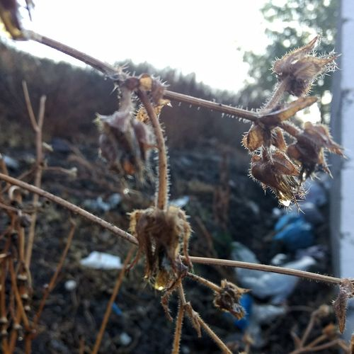 paradoja EyeEm Selects Winter Nature Cold Temperature No People Snow Outdoors Plant Beauty In Nature Fragility