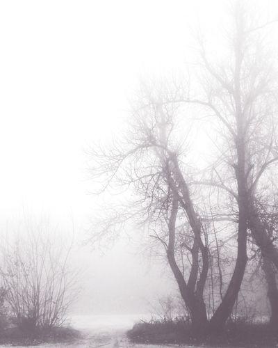 Morning Packwalk Together Foggy Morning Fog Tree Doginthefog Whereareyou