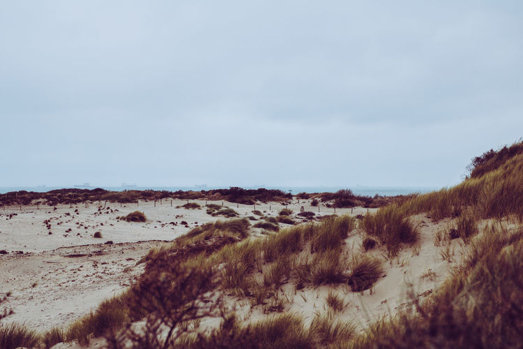Cloudy Dunes Kijkduin Scheveningen  The Netherlands Beauty In Nature Day Grass Grey Weather Landscape Nature No People North Sea Outdoors Scenics Sky Tranquil Scene Tranquility Perspectives On Nature EyeEmNewHere