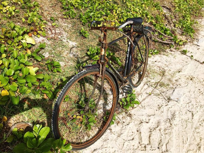 Old bicycle near the beach Old Bicycle Mauritius Mauritius Beach Bicycle Transportation Mode Of Transport No People Day Wheel Land Vehicle
