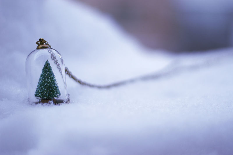 Christmas tree locket on snow