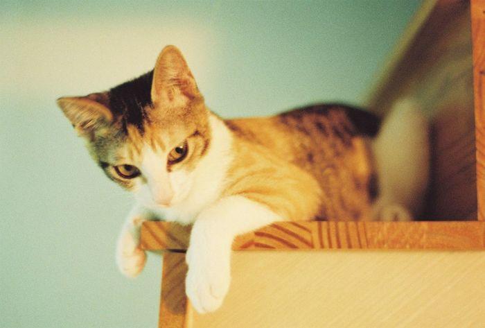 bastet Bastet Film Photography NikonF100 Cat