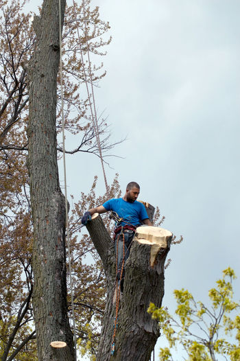 A tree climber pieces out a tree with a chain saw to take down a dangerous tree