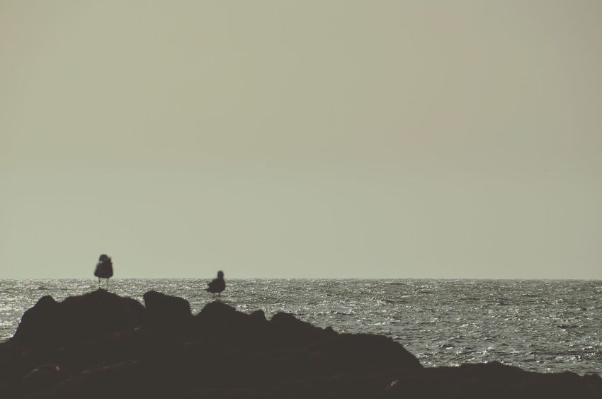 Animals In The Wild Animal Wildlife Silhouette Sea Bird Animal Themes Animal Nature Perching Outdoors Horizon Over Water Beach Tranquility Scenics Day Beauty In Nature Sky No People Water Colony EyeEm Masterclass Shootermag Eye4photography  Beauty In Nature Negative Space