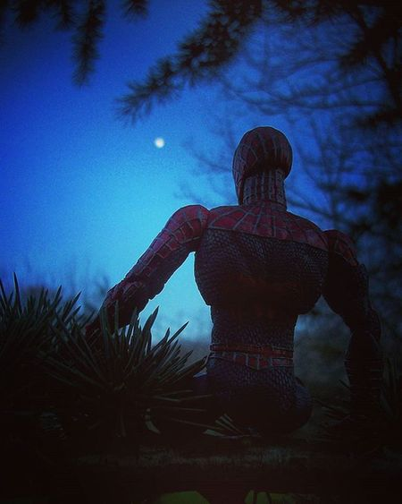 As spidey watches the moon rise on the final day of Fwebruary he thinks back to all the photos i didn't take and weeps gently through the branches of a near by tree! Fwebruary Spiderman Toyphotography Toyo Toyunion Toycrewbuddies Toydiscovery Marveltoypics