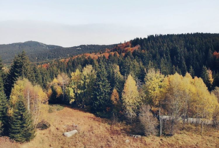 Autumn Bulgarian Nature Bulgaria Vitosha Mountain Drone  Beauty In Nature Plant Tree Tranquility Tranquil Scene Growth Sky Scenics - Nature Nature Land Landscape Mountain Forest Non-urban Scene No People Environment Day Idyllic Autumn Outdoors