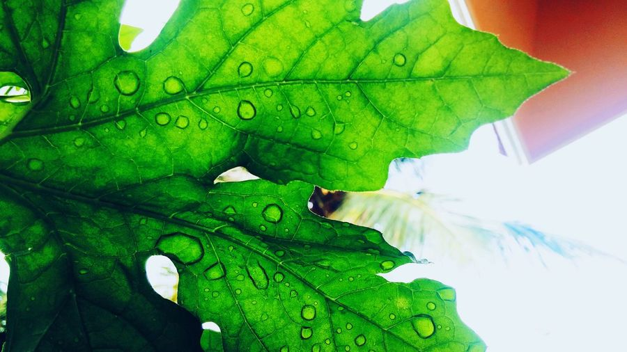 Leaf Green Color Nature Growth Close-up No People Day Outdoors Fragility Freshness Beauty In Nature Droplets Beneath