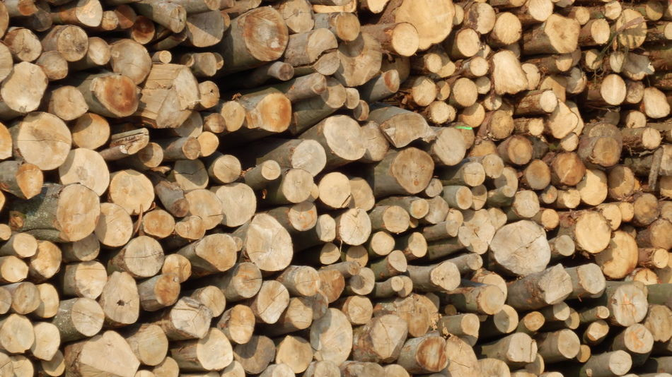 Wood - Wood Wood - Material Wooden Texture Wood Art Wooden Background Wood EyeEmNewHere Sticks Firewood Felling Of Wood Woodshed Pattern Nature Stacked Tree Forestry Clearance Backgrounds Sawmill Lumber Mill Trees Brown The Great Outdoors - 2017 EyeEm Awards EyeEm Selects Perspectives On Nature