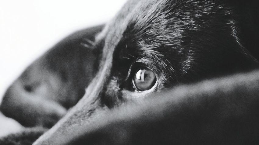 my lovely Milla Puppy Puppylove 😘😍🐶 My Puppy Puppyeye Blackandwhite Photography Black And White Eye4photography  Eyeemdog