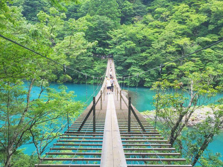 """Crossing Bridges"" Yumeno Tsuribashi Kawanehoncho Haibaragun Shizuoka 静岡 Japan Bridge Suspension Bridge Nature Emerald Emeraldgreen"