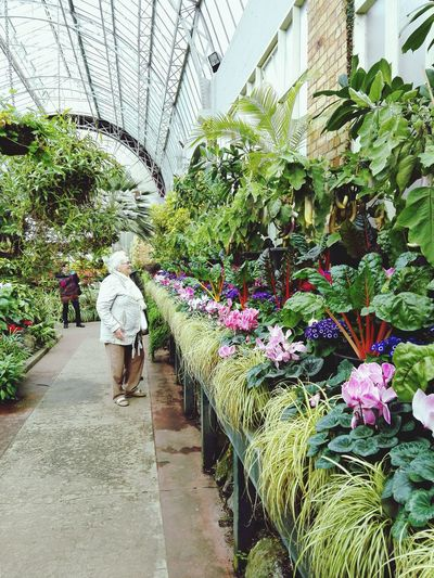 Row of Flowers (1/2). Real People Full Length Plant Women Growth Day Nature Indoors  Flower Beauty In Nature Greenhouse Adult Plant Nursery One Person Adults Only People