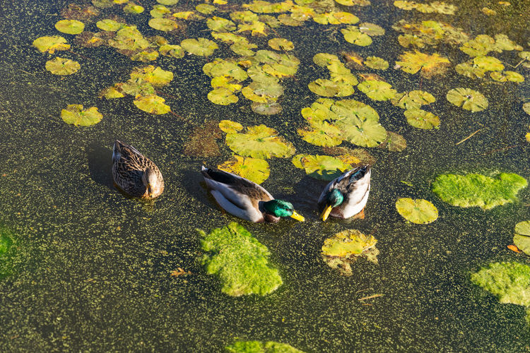 Autumn Autumn Colors Autumn Leaves Botanical Gardens Day Fall Fall Beauty Fall Colors Fauna Flora Garden Garden Photography Nature Nature Photography Outdoors Wild