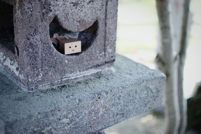入ってみた。 Danbo Taking Photos Cheese! Enjoying Life Depth Of Field Shrine Stone Lanterns