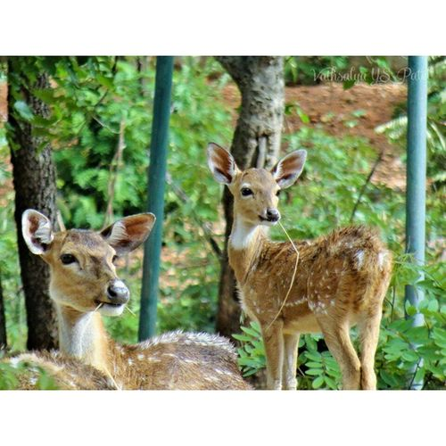 Instasquare Vathsalyapatel photography Bns_animals Vscoindia _oye Indiapictures