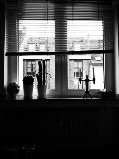 Pot plants on window sill