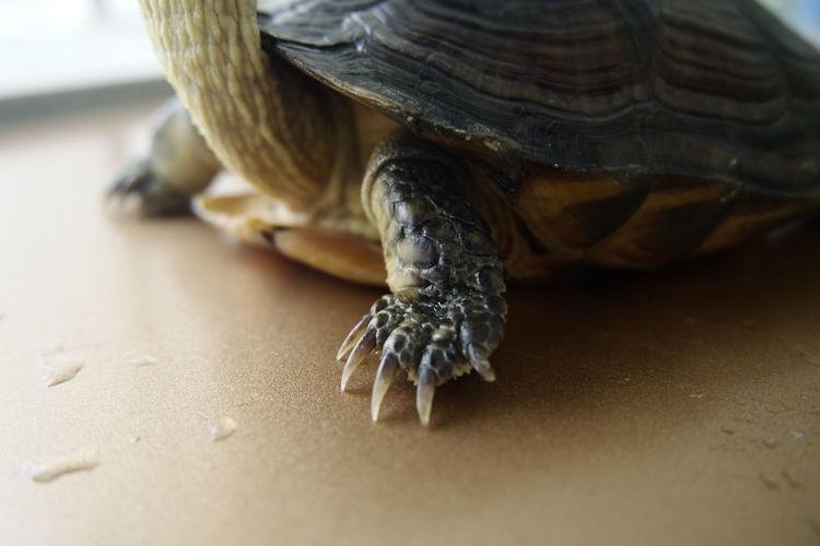 sunbathing Tortoise Sunshine Sunbathing Rooftop Lifestyles Weekend Animal Day Hand Tortoise Hand Close-up