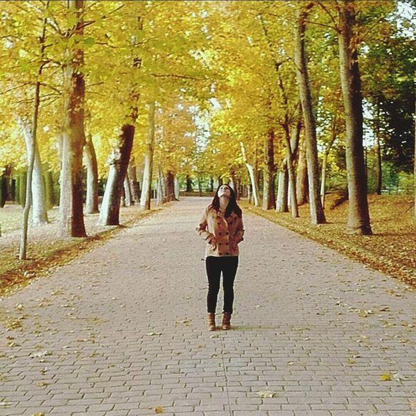 Otoño Hojas Secas Tree That's Me hojas secas como recuerdos fallezidos desaparecidos con el pasar efímero del viento de un otoño en el que creí sentirme satisfecha.