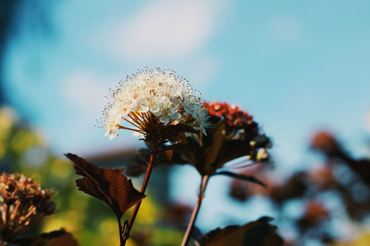 Close-Up Of Flower Against Sky