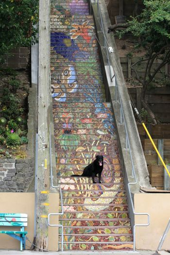 The Hidden Garden Steps is a community driven public art initiative to create mosaic steps a public garden and a wall mural. Stairways My Dogs Are Cooler Than Your Kids I Love My Dog Cute Pets Dog Eye Em A Dog Taking Photos Walking Around