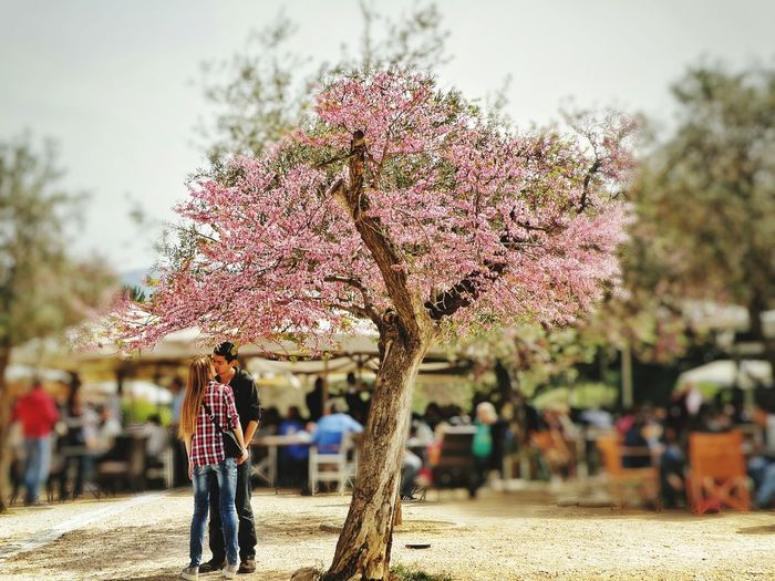 Urban Spring Fever Spring Flowers Love Couples Springtime Spirng Just Came Spring Flowers <3 Thisio Athens Athens, Greece