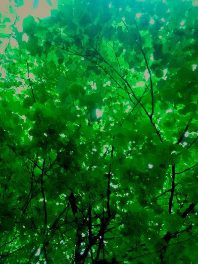 Природа, листочки 💚 First Eyeem Photo