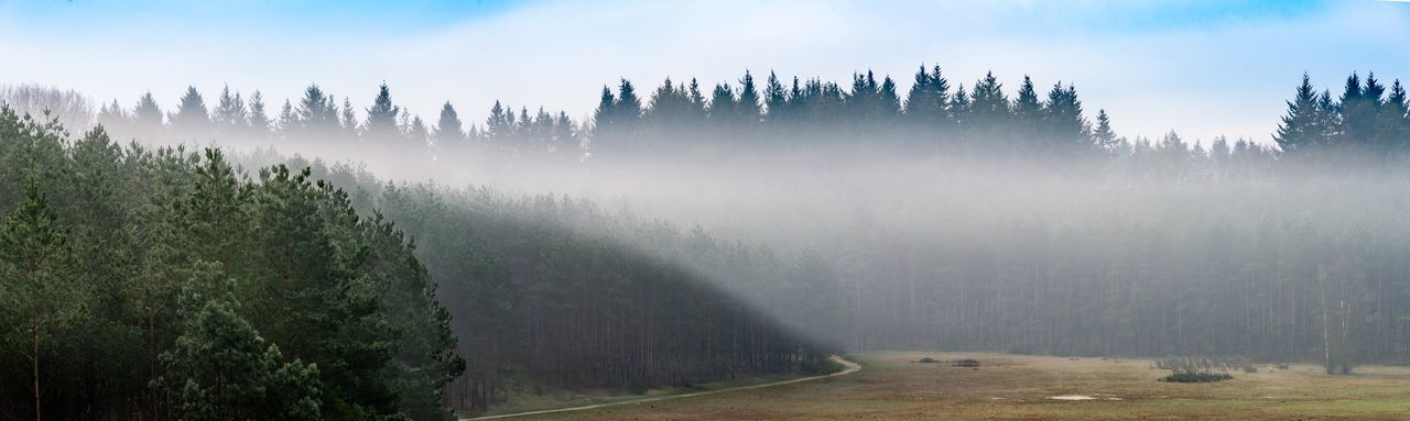 Morning mist rolling over the forrest Hillside Trees Tree Fog Beauty In Nature Nature Scenics - Nature Sky Tranquility Landscape Cloud - Sky Forest Plantation