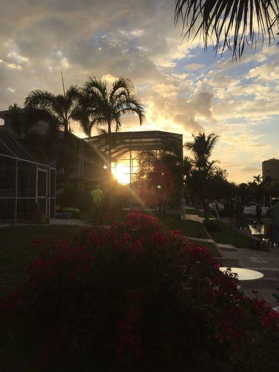 Another Florida Sunset! BonitaSpringsFL Bonitasprings Sunsets Florida Florida Life FloridaSunsets Palm Tree Nature Sky Beauty In Nature Cloud - Sky
