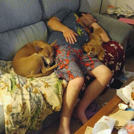 Sosleepy Napping Dogs Nappingwithdaddy Pets Dog Love Puppy Love ❤ Dogs Of EyeEm Comfortable Pomeranian Pomeraniansofinstagram Rhodesian Ridgeback Mix Animalsofinstagram Animal_collection Animalphotography Puppylove🐾🐶 Puppylife Letsleepingdogslie Ladysif Pomladysif Thor  Thorthedog