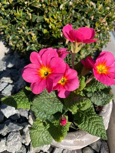 Bavaria Plant