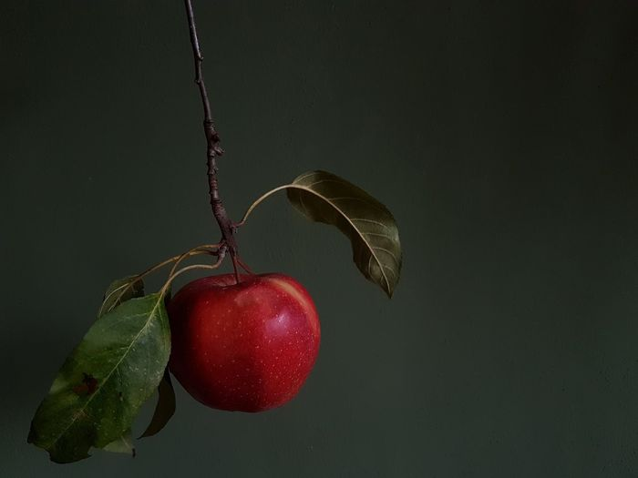 Red Apple Apple Apple Branch Apple Leaves Green Background Fruit Hanging Red Studio Shot Close-up Food And Drink