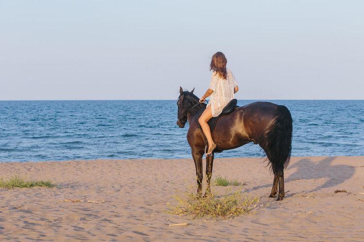 Full length of a horse on the beach