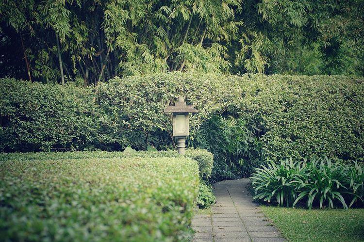 Garden Photography Green Color Landscape Yuexiu Park, Guangzhou Eyeemphotography Sonya7