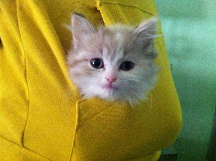 Kitten in a