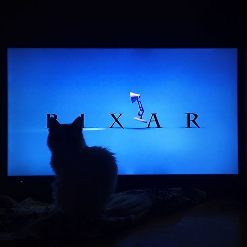 Cinema In Your Life Animal Animals Funny Cat Kittens Cats Cat♡ Cat Lovers Kitten Kittenoftheday Kittensofinstagram Pixar  Pixarporn My Favorite Photo Fun FUNNY ANIMALS