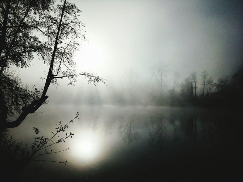 Tree Riverside Fog Amarante Portugal ☆
