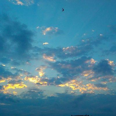 Iftar hazirligi yaparken yine mutfagin balkonundan Gokyuzu ve Gunbatimi temali fotograflara geldik... Sarilacivert sky skyporn nature manzara color hdr hd istanbul Turkiye Ramazan ramadan art photography cloud