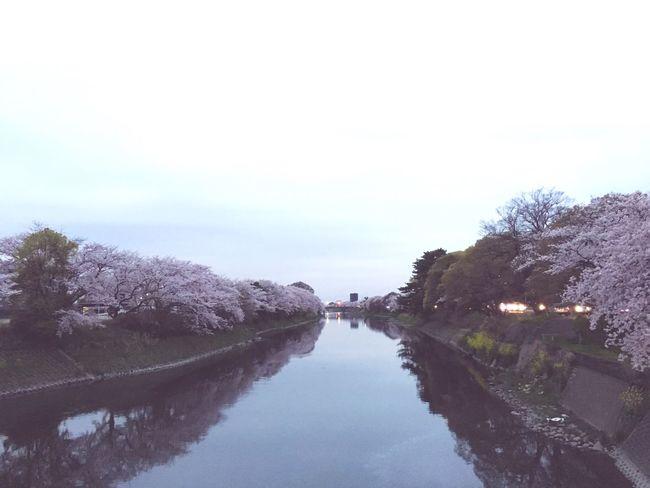 Water Tree Nature Beauty In Nature Sky Outdoors Day No People Pink Color Springtime April Nice Sakura Cherry Blossom Beautiful Japon Flowers Cloud - Sky EyeEm Nature Lover Eyeemphotography Eyeemphoto Ciero