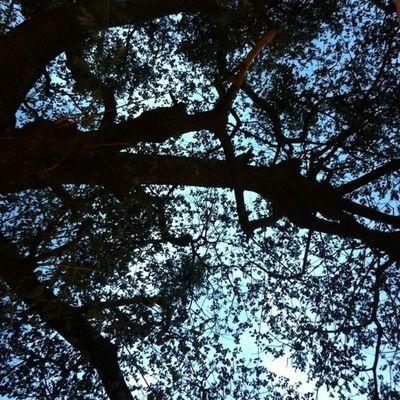 เวลามีความรัก ผม อยากให้มันยืนยาวเหมือนต้นไม้ใหญ่