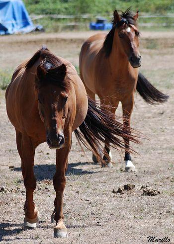 Horse Nikonphotography Nikonespaña NikonD60 Herbivorous