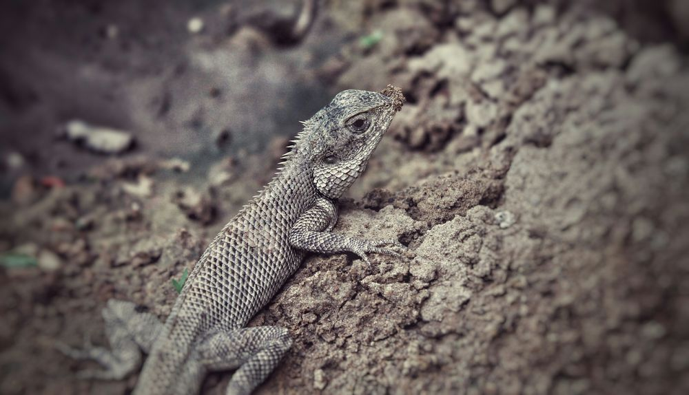 Reptiles Chamäleon Rookiephotographer Nature_collection