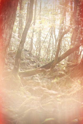 Traveling Japan Forest Wood Jukainomori