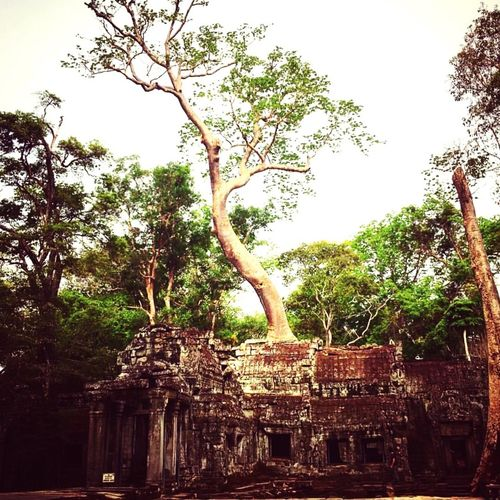 Angkor 2016. Tree Branch Low Angle View Growth Tree Trunk Clear Sky Park - Man Made Space Day Travel Destinations Famous Place Outdoors Sky Tourism Nature History Green Color Weathered Ancient Civilization No People Creativity IPhone Photography Memories Cambodia Archeology Architecture_collection