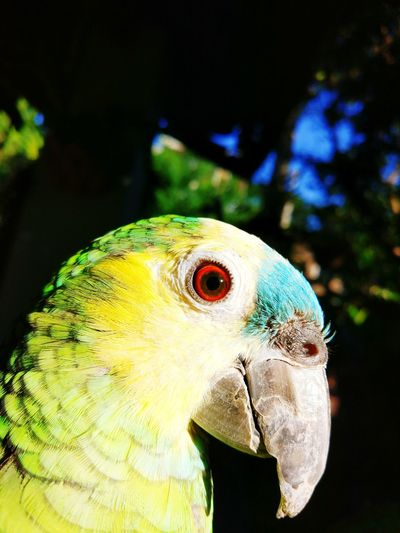 One Animal Animal Body Part Bird Animal Themes No People Outdoors Macaw Nature Beauty In Nature Animal Head  Parrot