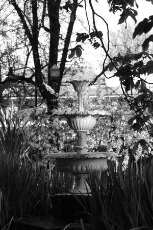 Architecture Plant Formal Garden Tranquility Machattie Park Bathurst Australia EyeEm Gallery Monochrome Photograhy Blackandwhite Eyeem Australia EyeEm Best Shots Beauty In Nature Monocrome Monochrome Photography Australian Landscape