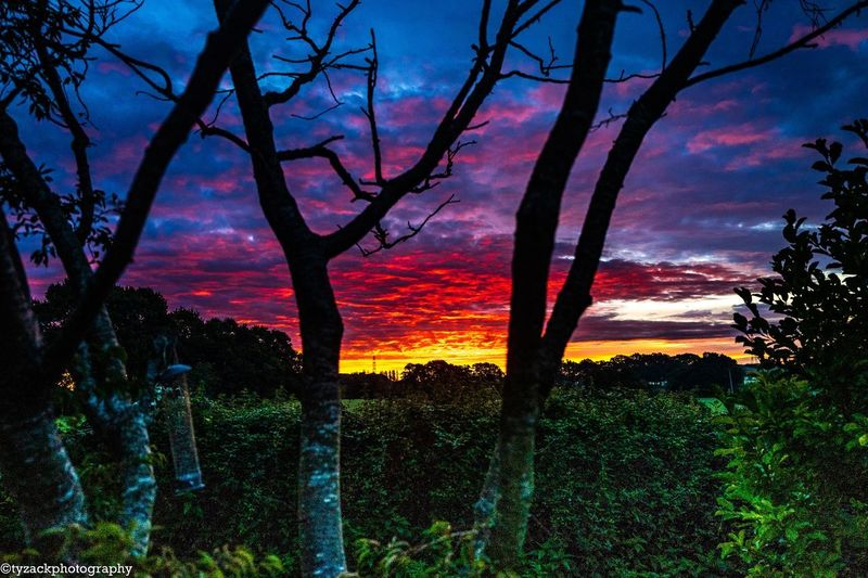 Spectacular sunrise Tree Beauty In Nature Plant Sky Tranquility Scenics - Nature Tranquil Scene Sunset Nature Idyllic No People Field Land Landscape Outdoors Non-urban Scene Tree Trunk Environment