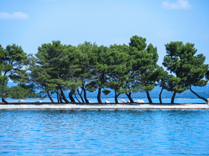 Trees by swimming pool against sky