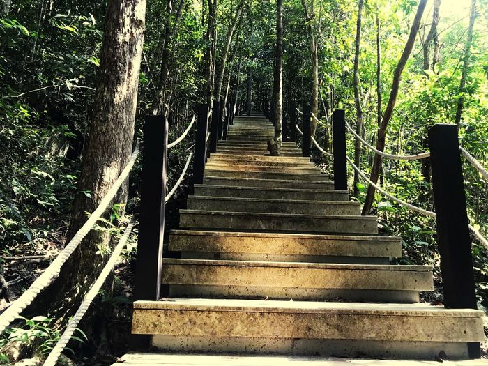 The Way Forward Direction Plant No People Nature Tree Staircase In A Row Low Angle View Metal Land Steps And Staircases Empty Growth Architecture Railing Day Sunlight Built Structure Outdoors