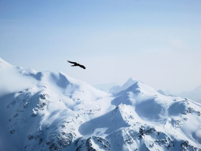 Birds flying over snowcapped mountains against clear sky