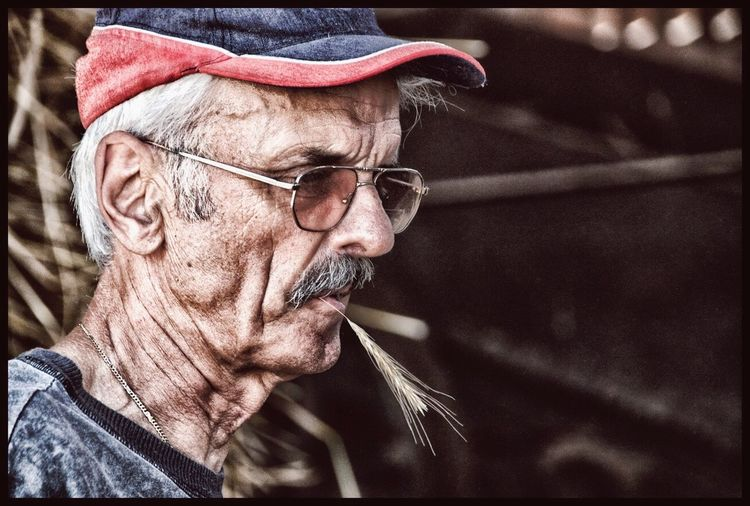 Friulan Farmer Real People Senior Adult One Person Portrait Old-fashioned People Senior Men One Man Only Adult Friuli Venezia Giulia Eyeglasses  Udine Face Canonphotography Canonesia Canon650d Canon_photos Canon_official Spike Farm Farmer Country Vibrant Color Outdoors Country